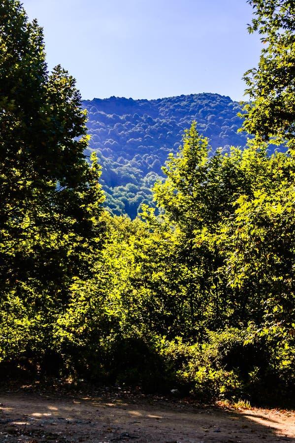 Floresta e Forest Of Turkish Countryside imagens de stock