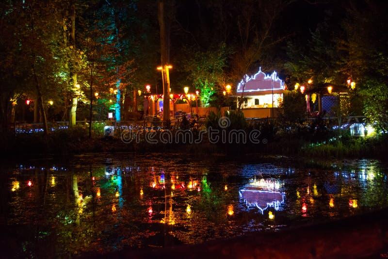 Floresta e lago iluminados imagens de stock