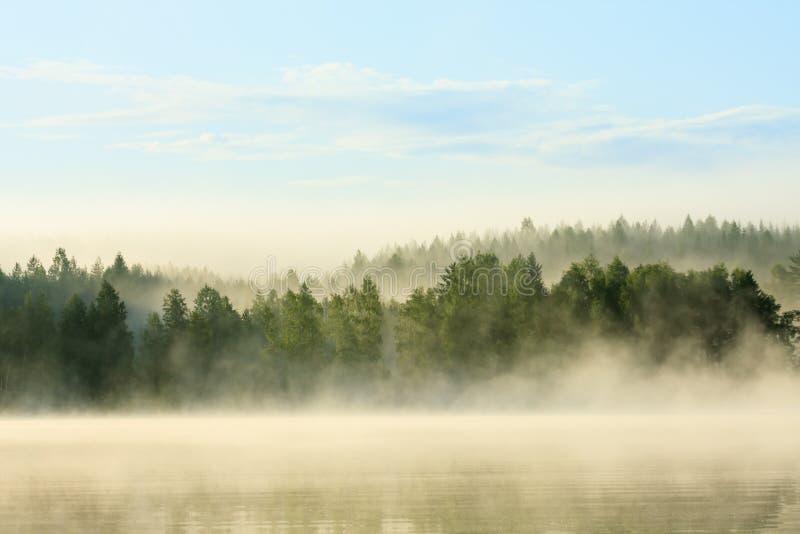 Floresta e lago nevoentos no alvorecer imagem de stock