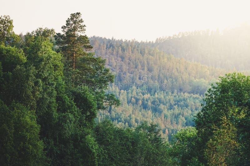 Floresta e montanha no por do sol, Suécia do norte foto de stock royalty free