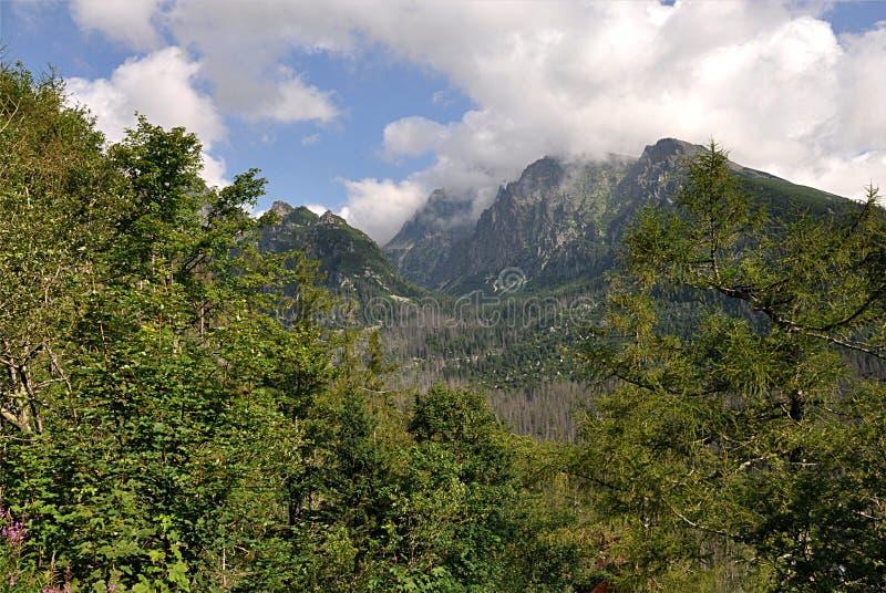 Floresta e montanhas, Eslováquia, Europa fotografia de stock royalty free