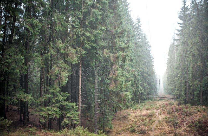 Floresta e névoa imagens de stock