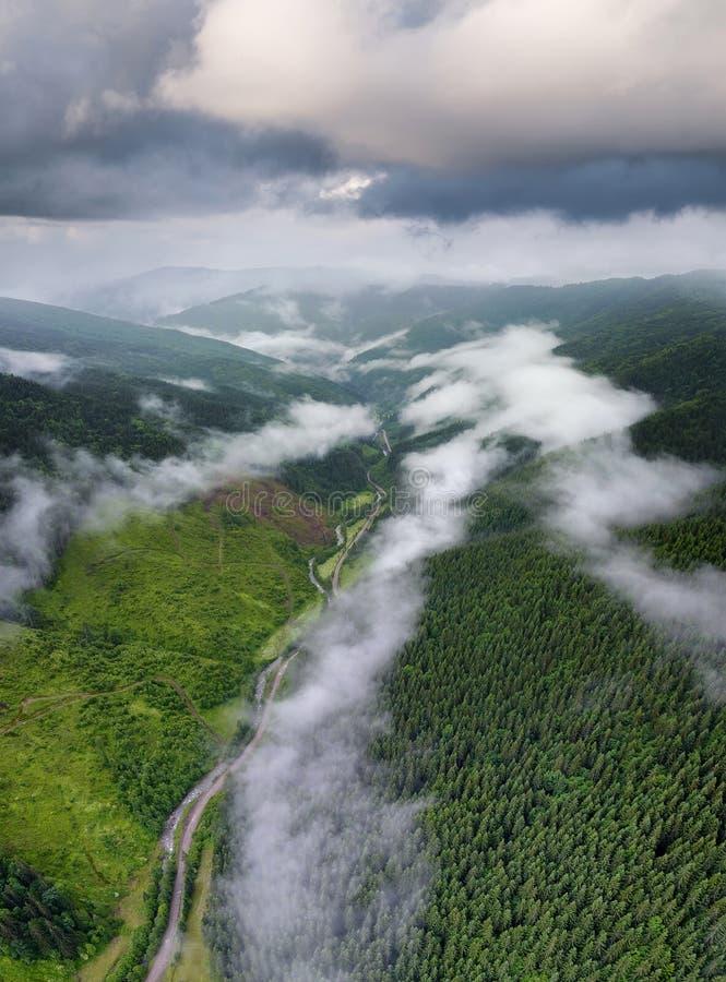 Floresta e nuvem como um fundo fotos de stock royalty free