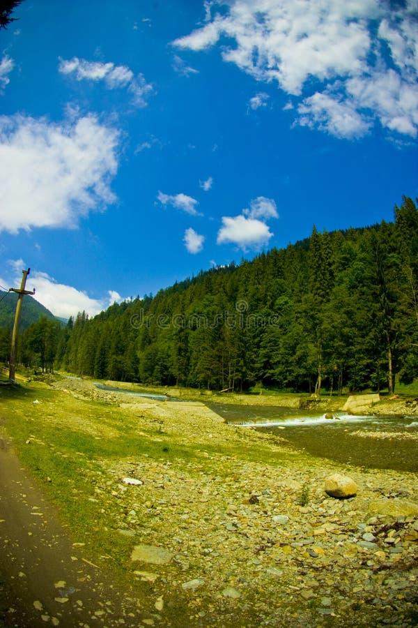 Floresta e rio fotos de stock