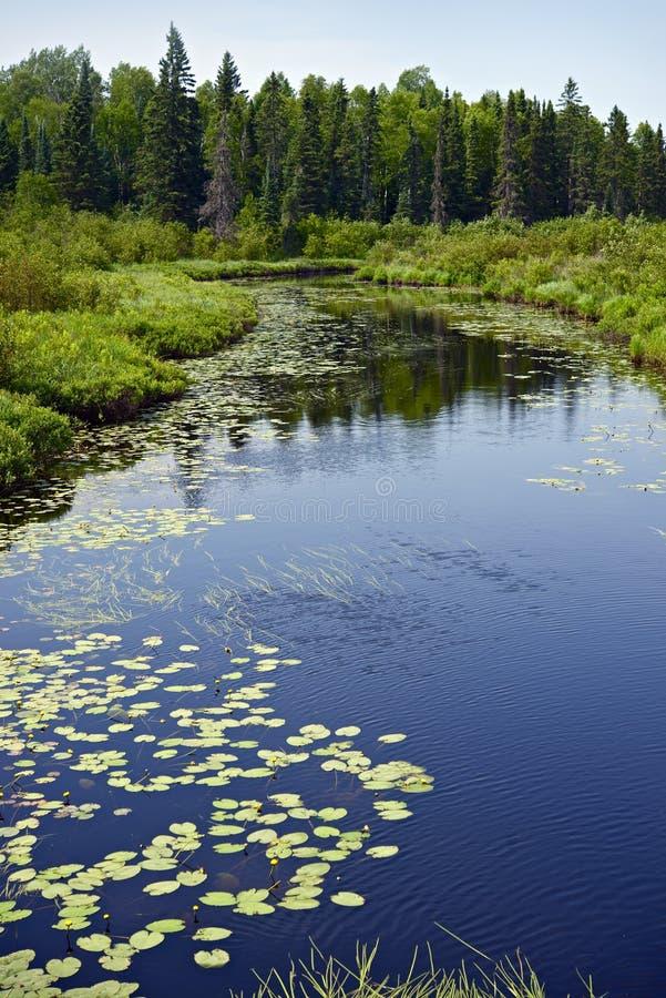 Floresta e rio de Minnesota foto de stock