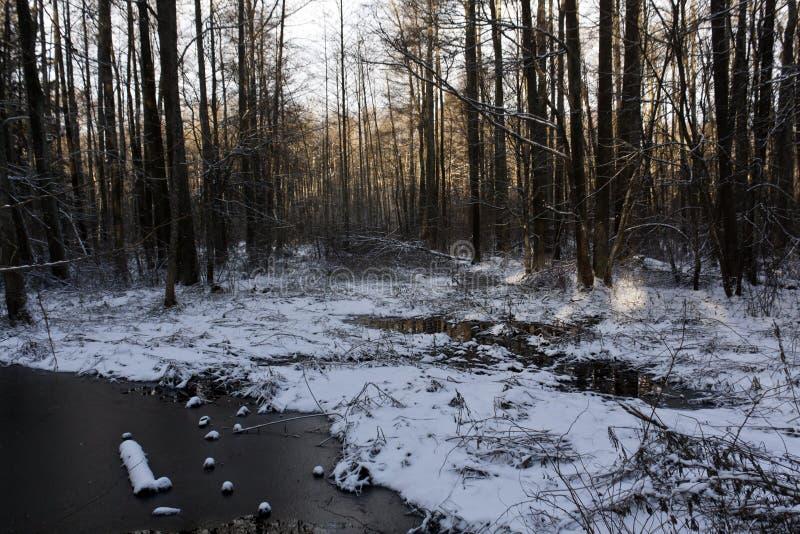 Floresta e rio do inverno cobertos com a neve fotografia de stock royalty free