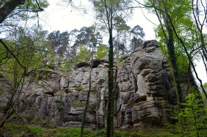 Floresta e rochas foto de stock royalty free
