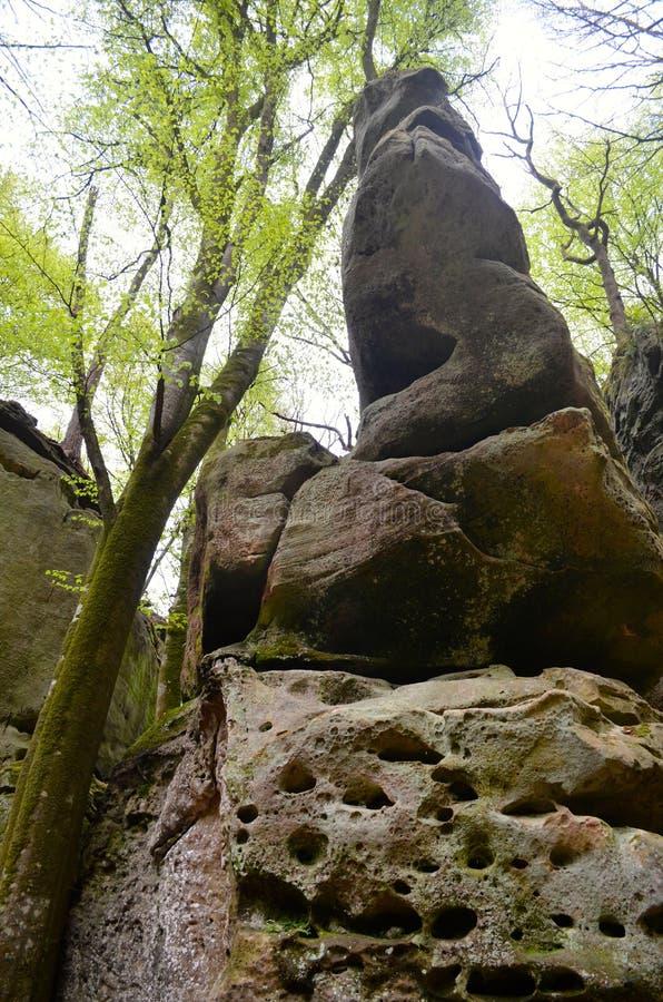 Floresta e rochas imagem de stock royalty free