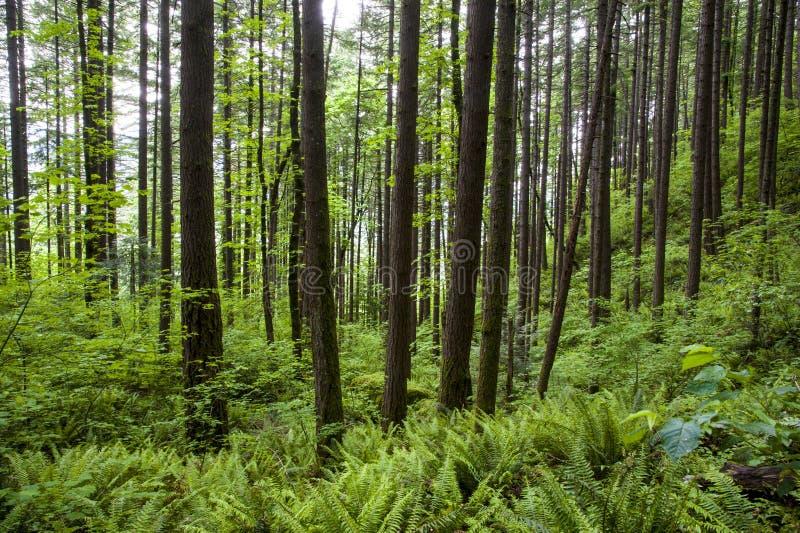 Floresta e samambaias verdes imagem de stock