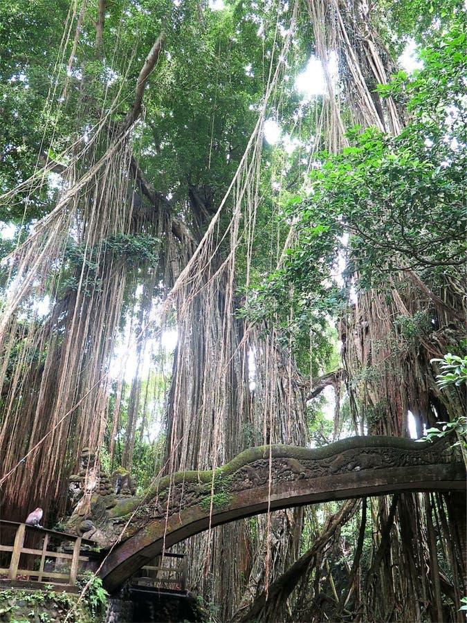 Floresta e templo imagem de stock