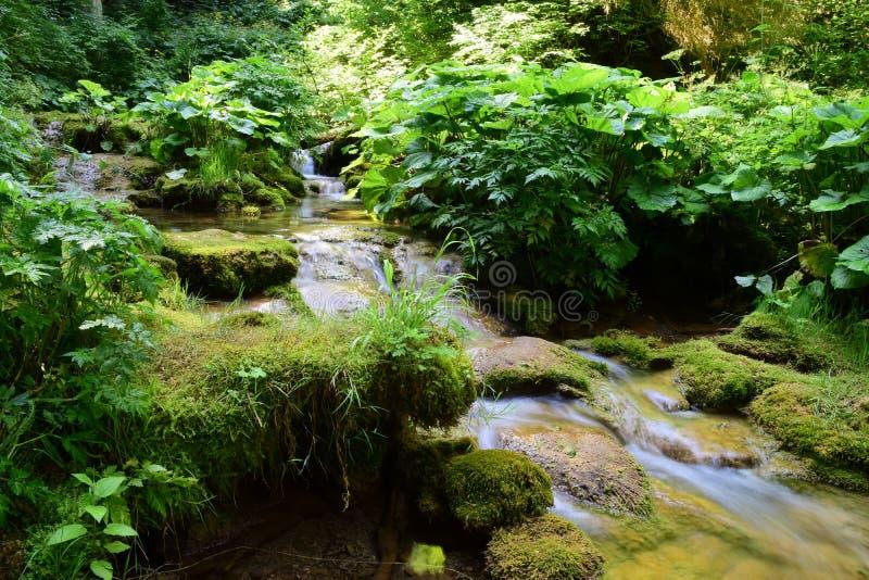 Floresta e um córrego bonito, paz do paraíso fotografia de stock