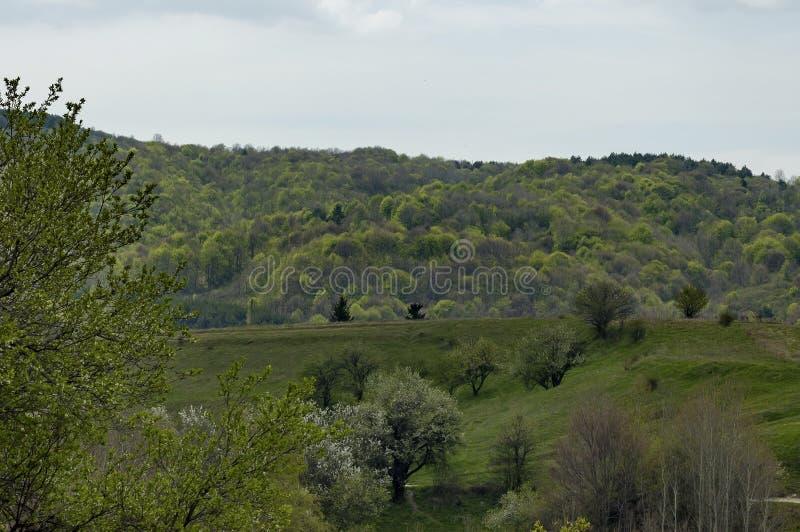 Floresta e várias árvores com folha e a flor novas na primavera na montanha de Plana imagens de stock