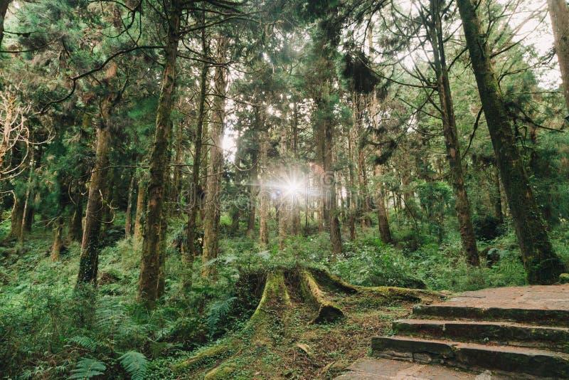 Floresta em Alishan Formosa, taichung foto de stock
