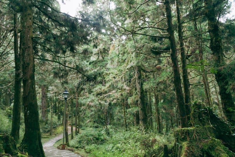 Floresta em Alishan Formosa, taichung imagens de stock