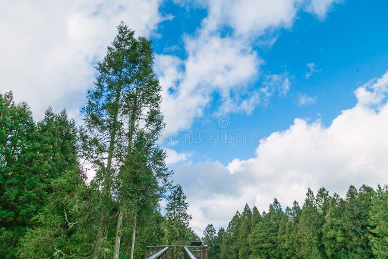 Floresta em Alishan Formosa, taichung imagens de stock royalty free