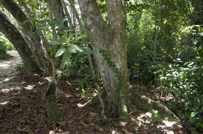 Floresta em Costa Rica fotografia de stock