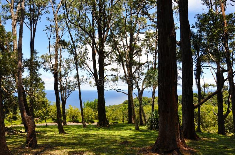 Floresta em Maui fotografia de stock royalty free