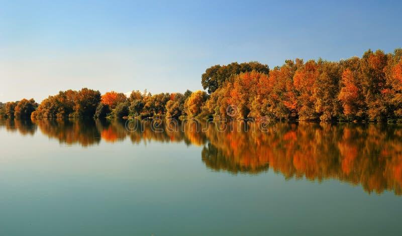 Floresta em outubro atrasado imagens de stock