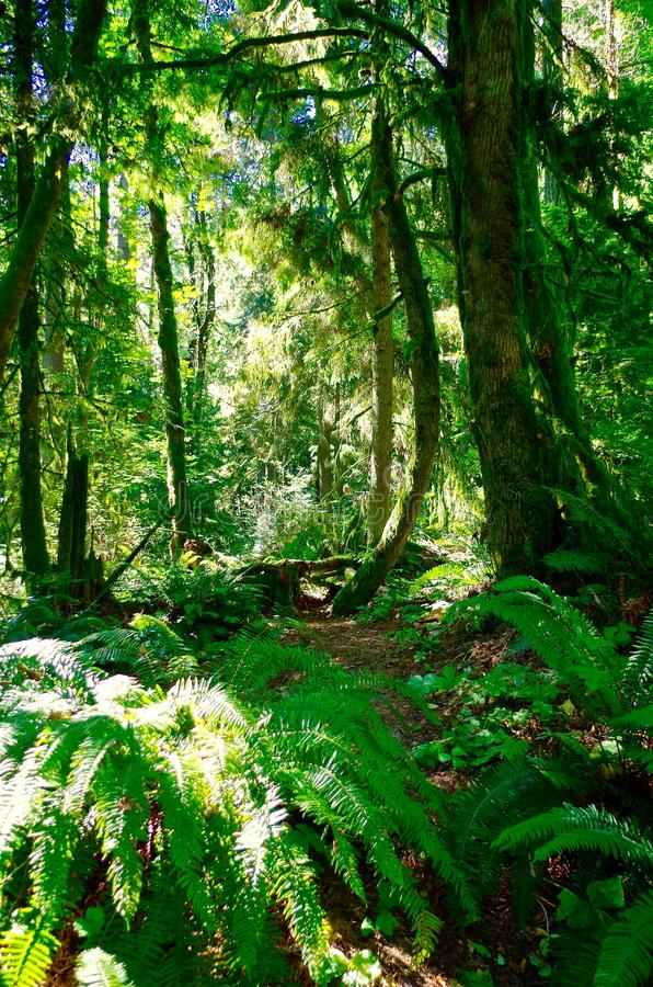 Floresta em Portland Oregon imagens de stock