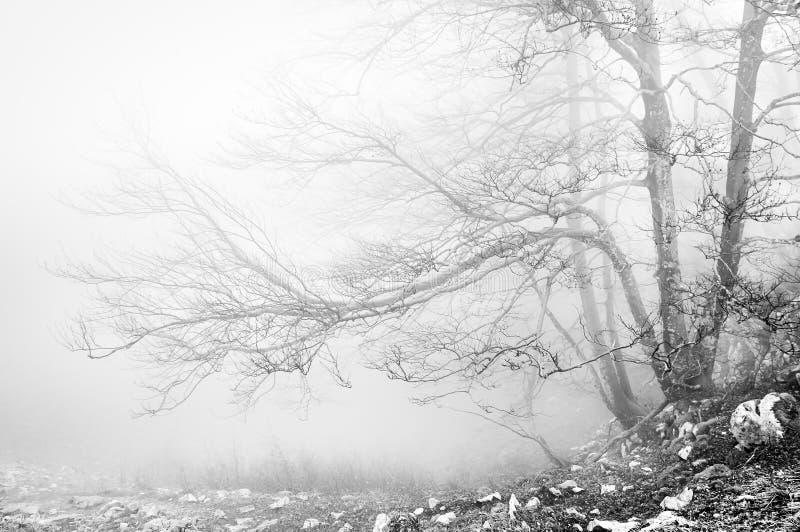 Floresta em preto e branco foto de stock