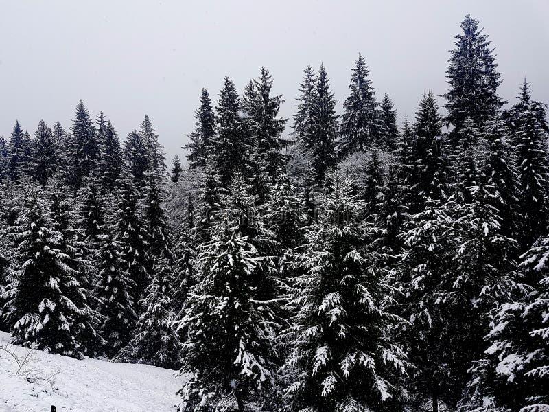 Floresta em repouso fotos de stock royalty free