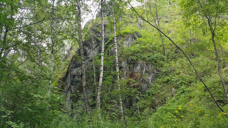 Floresta em Sibéria fotos de stock royalty free
