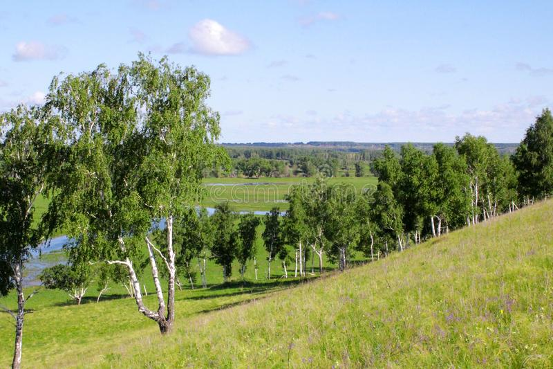 Floresta em Sibéria contra um por do sol bonito fotografia de stock