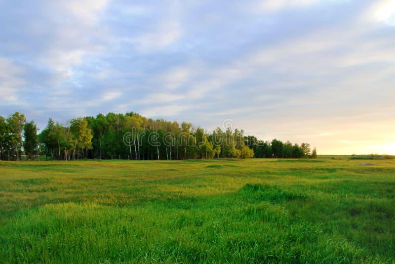 Floresta em Sibéria contra um por do sol bonito fotos de stock royalty free