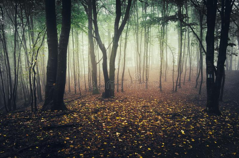 Floresta encantado do outono com folhas caídas foto de stock