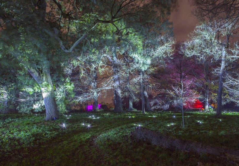 Floresta encantado no parque de Syon fotos de stock royalty free
