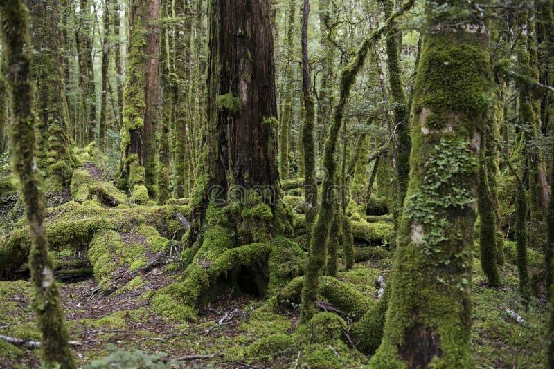 Floresta encantado, Nova Zelândia imagens de stock