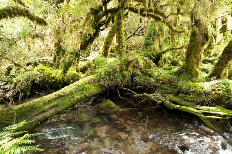 Floresta encantado - parque nacional de Queulat - o Chile imagem de stock