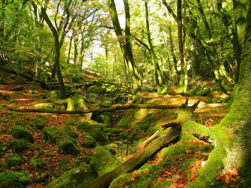 A floresta Enchanted fotos de stock royalty free