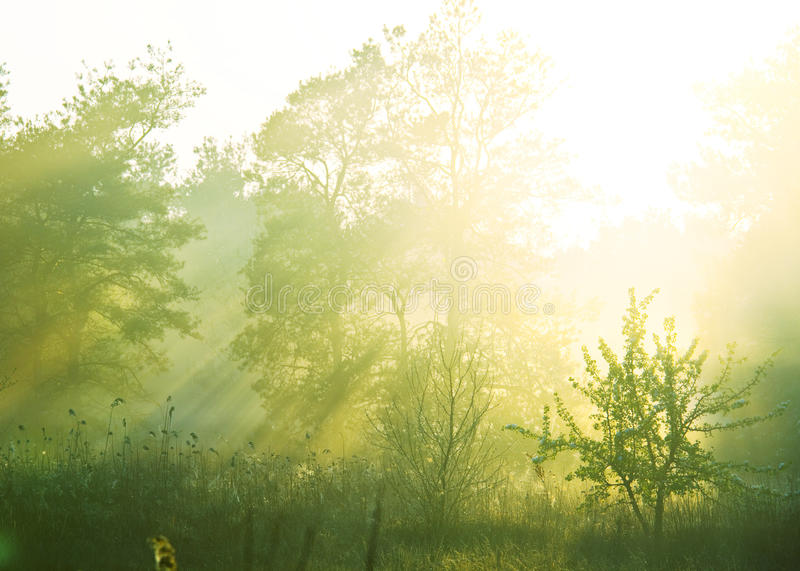 Floresta enevoada foto de stock