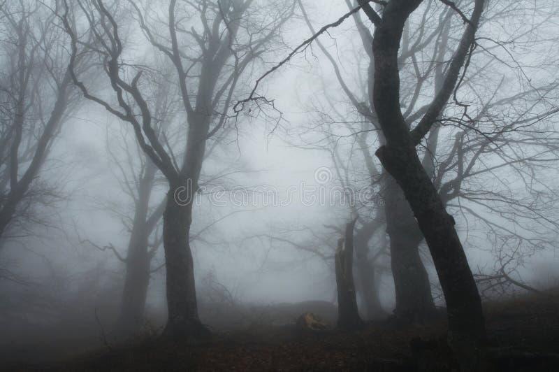 Floresta enevoada fotografia de stock royalty free