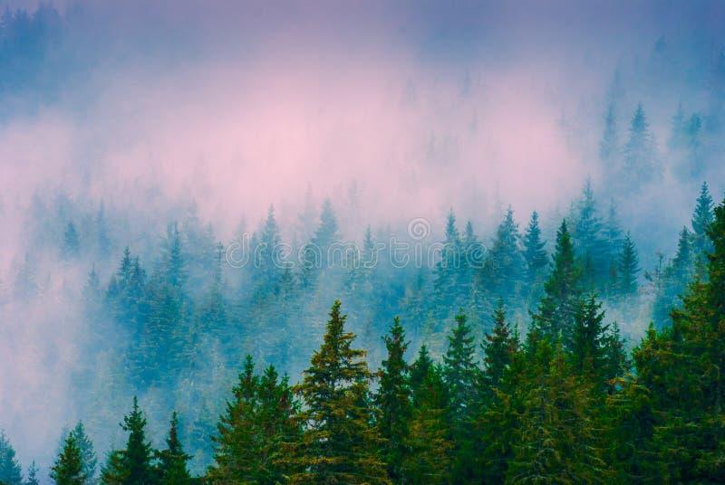 Floresta enevoada Carpathian imagem de stock royalty free