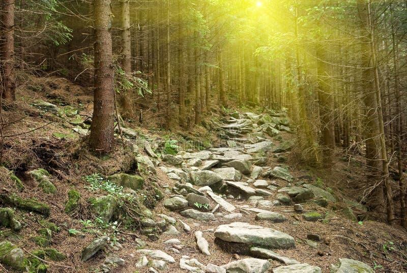 Floresta enevoada da montanha foto de stock royalty free
