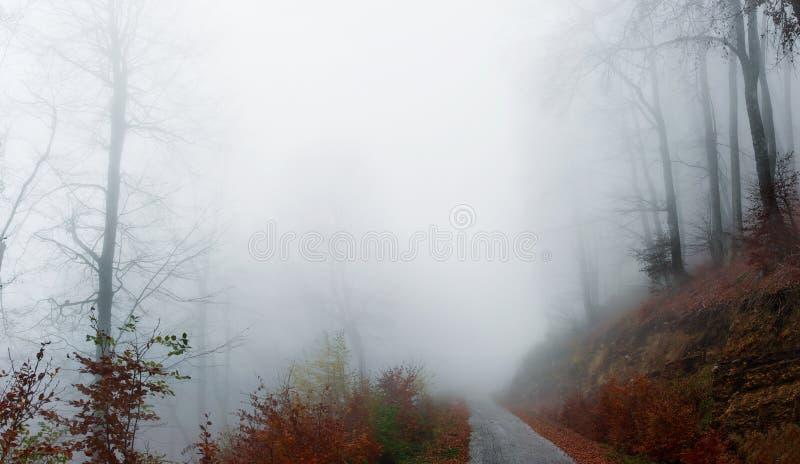 Floresta enevoada do outono foto de stock
