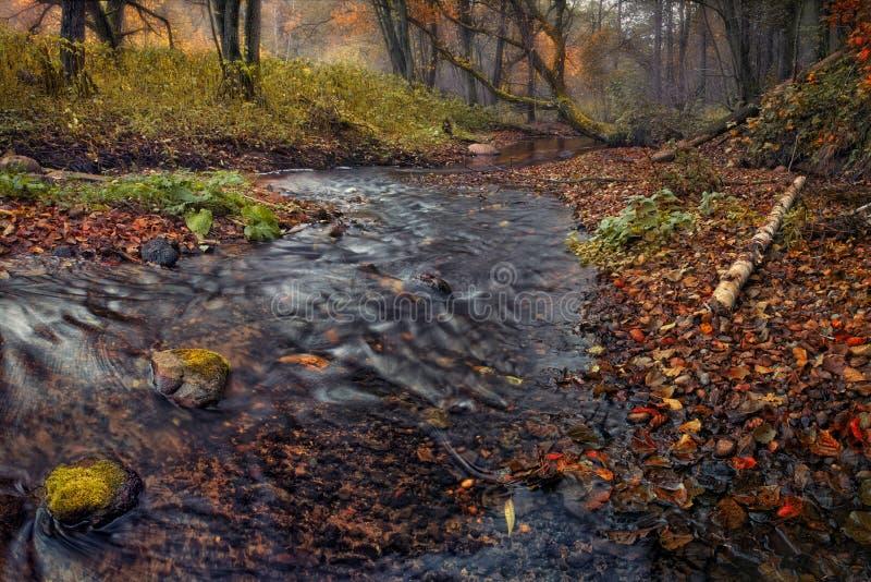 Floresta enevoada do outono com lotes das folhas caídas e de um córrego pequeno da floresta imagem de stock royalty free
