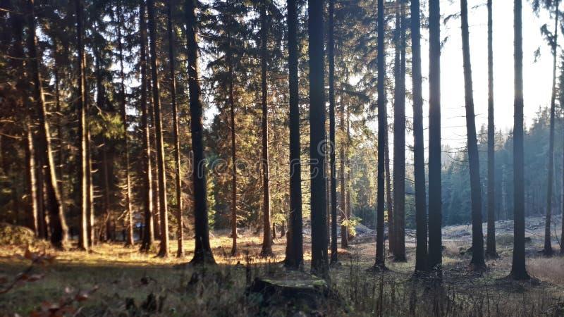 Floresta ensolarada fotos de stock royalty free