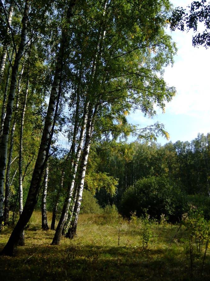 Floresta ensolarada imagens de stock royalty free