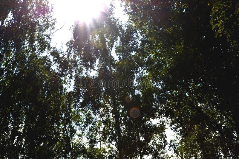 Floresta ensolarada fotografia de stock