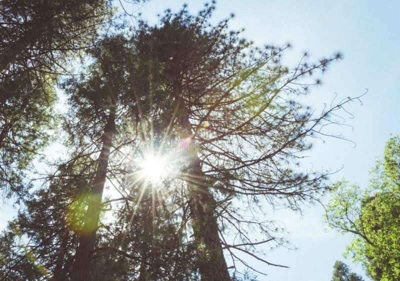 Floresta ensolarada do verão do vale de Yosemite Parque nacional de Yosemite, Califórnia, EUA imagens de stock