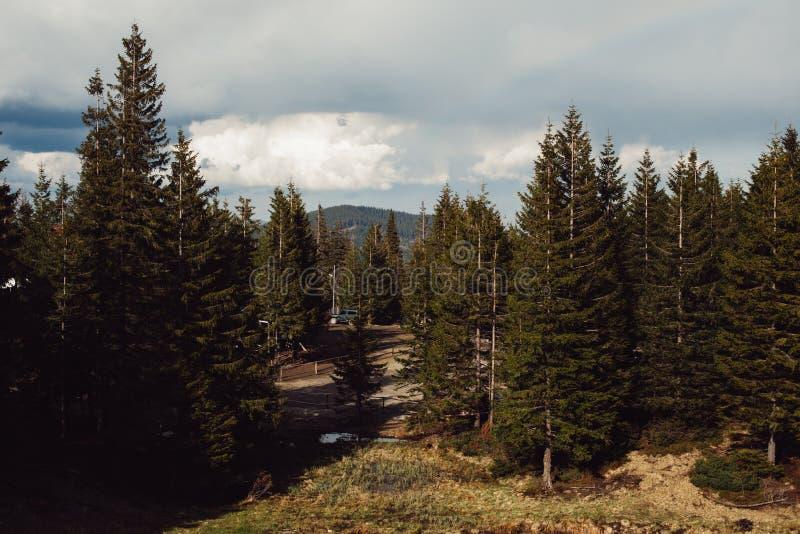 Floresta escandinava norte do pinho, da Suécia do curso fundo natural do moderno do vintage fora imagem de stock
