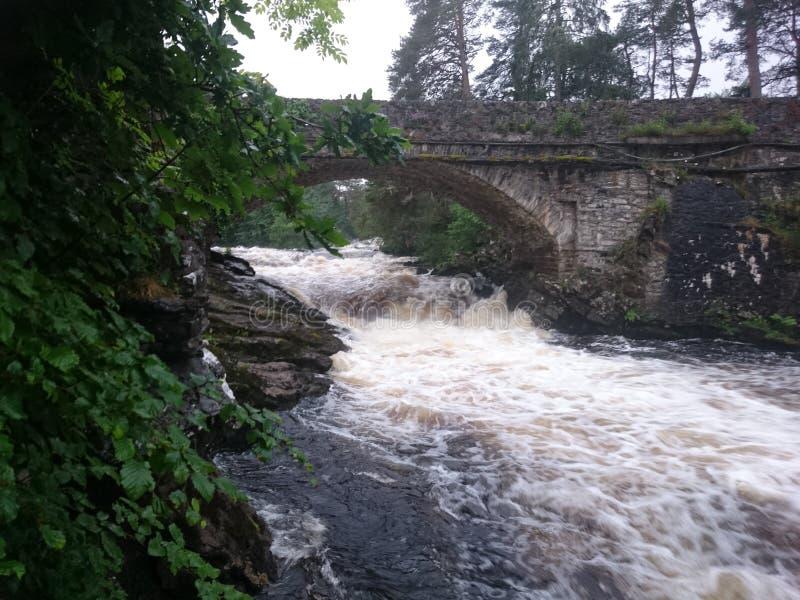 Floresta escocesa imagens de stock royalty free
