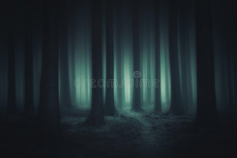 Floresta escura e assustador imagem de stock