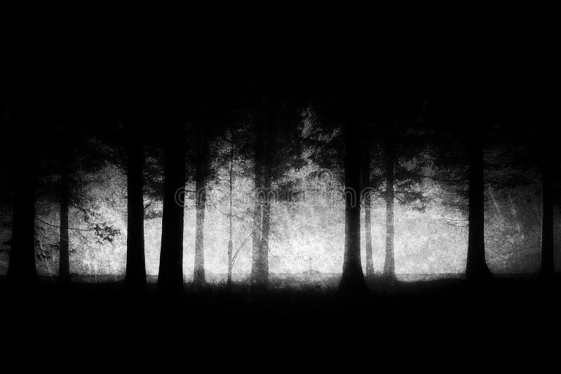 Floresta escura e assustador com texturas sujas fotografia de stock