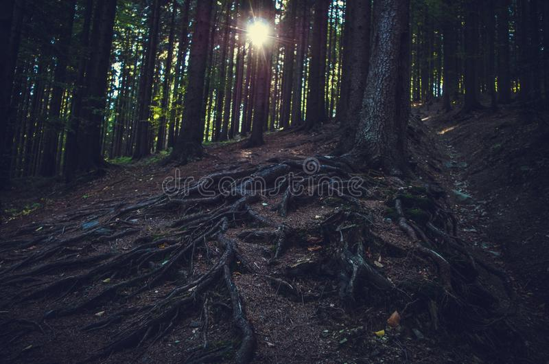 A floresta escura e o sol de brilho imagem de stock royalty free