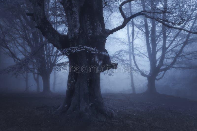 Floresta escura misteriosa na noite imagens de stock royalty free