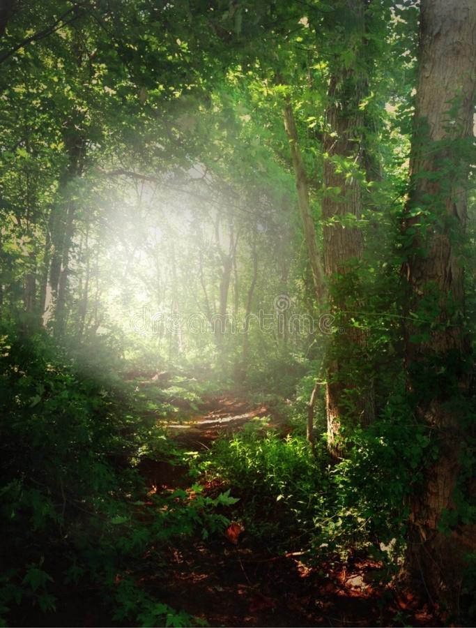Floresta esmeralda fotografia de stock